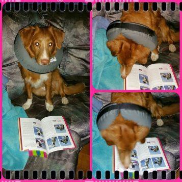 Foxy läser på!