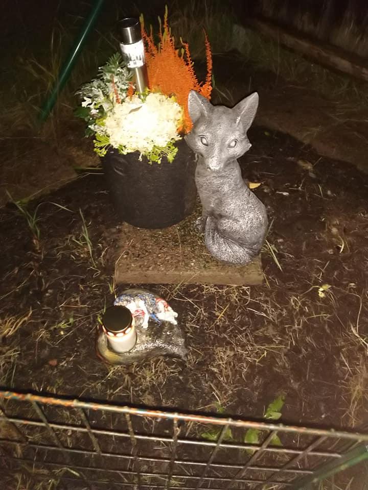 Foxys hörn, här satt hon ofta...